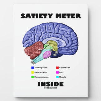 Satiety Meter Inside Anatomical Brain Humor Plaque