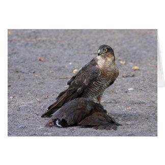 Satisfied Sparrowhawk Card