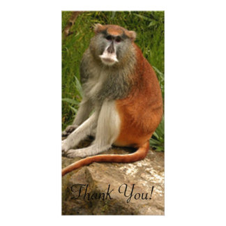 Saturated Patas Monkey With Long Tail Card