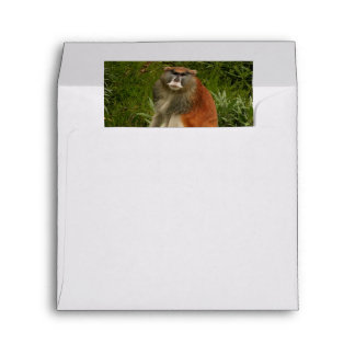Saturated Patas Monkey With Long Tail Envelope