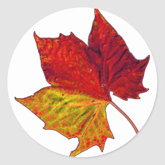 Saturated Sycamore Classic Round Sticker