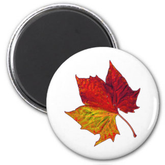 Saturated Sycamore Fridge Magnet