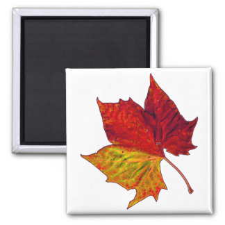 Saturated Sycamore Refrigerator Magnet