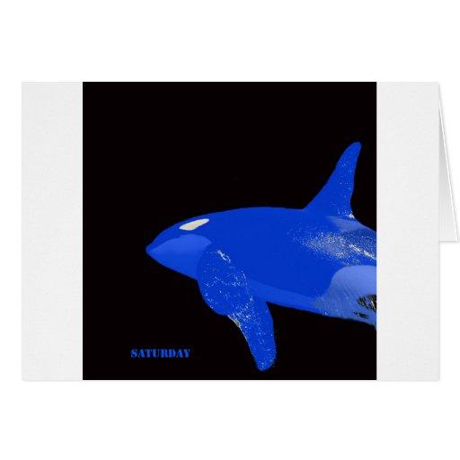 Saturday Blue Orca Card