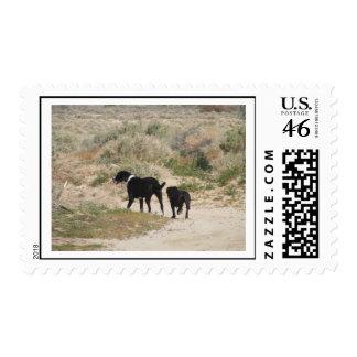 Saturday Visitors Postage Stamp