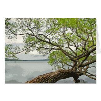 Sauce en el lago tarjeta de felicitación