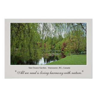 Sauce hermoso de la primavera y charca suaves posters