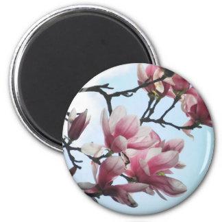 Saucer Magnolia Tulip Tree Flowers Photo Magnet