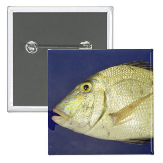 Saucereye Porgy 2 Inch Square Button