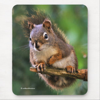 Saucy Red Squirrel in the Fir Mouse Pad