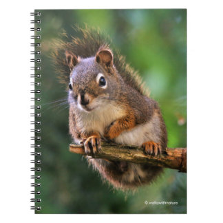 Saucy Red Squirrel in the Fir Notebook