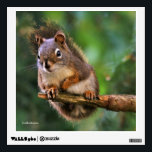 """Saucy Red Squirrel in the Fir Wall Decal<br><div class=""""desc"""">Add a touch of nature and wonder to your walls with this whimsical, wildlife-themed decal! Red squirrels on Galiano Island are undeniably bold and saucy, even going so far as to scold photographers and other two-legged creatures who wander into their territory. Photographed on Galiano Island in the early morning of...</div>"""