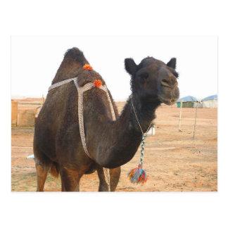 Saudi Arabia - Riyadh - Camel