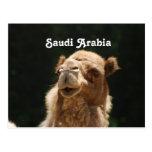 Saudi Arabian Camel Postcards