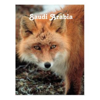 Saudi Arabian Fox Postcard