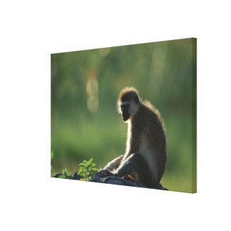 Savanna Monkey Canvas Print