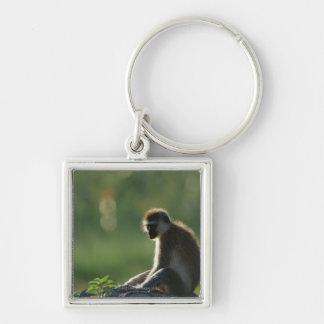 Savanna Monkey Keychain