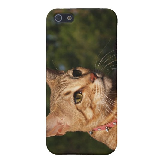 Savannah Cat 4  Cover For iPhone SE/5/5s