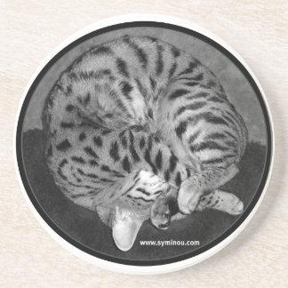 Savannah cat Coaster