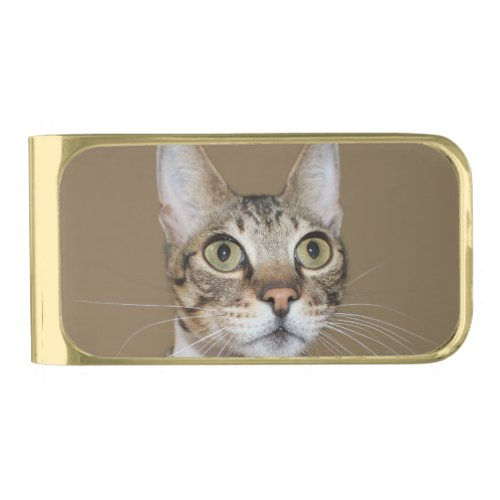 Savannah Cat In A Tie Gold Finish Money Clip