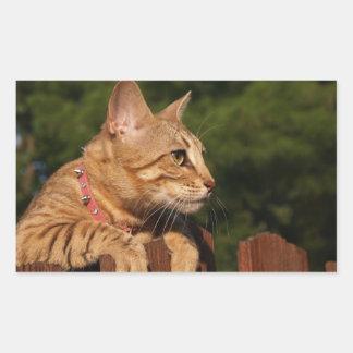 Savannah Cat Rectangle Sticker