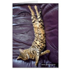 Savannah Cat Sleeping Card