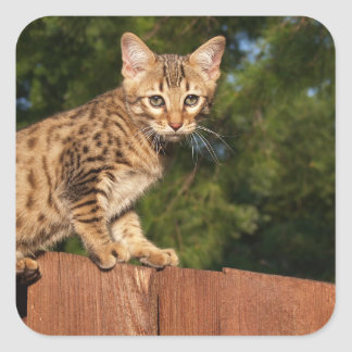 Savannah Cat Square Sticker