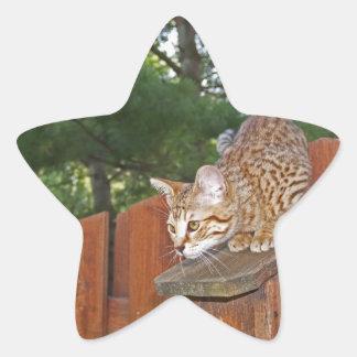 Savannah Cat Star Sticker