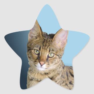 Savannah Cat Star Sticker