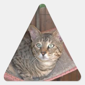 Savannah Cat Triangle Sticker