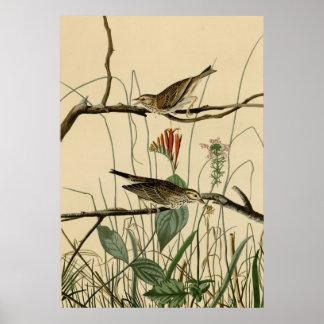Savannah Finch Print