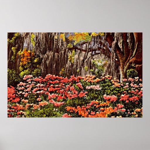 Savannah, Georgia Azaleas in Bloom Poster
