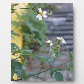 Savannah Georgia Floral Flowers Nature Plaque