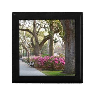 Savannah Georgia in Spring Forsyth Park Azaleas Oa Gift Box