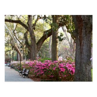Savannah Georgia in Spring Forsyth Park Azaleas Oa Postcard
