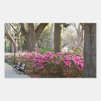 Savannah Georgia in Spring Forsyth Park Azaleas Oa Rectangular Sticker