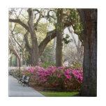 Savannah Georgia in Spring Forsyth Park Azaleas Oa Small Square Tile