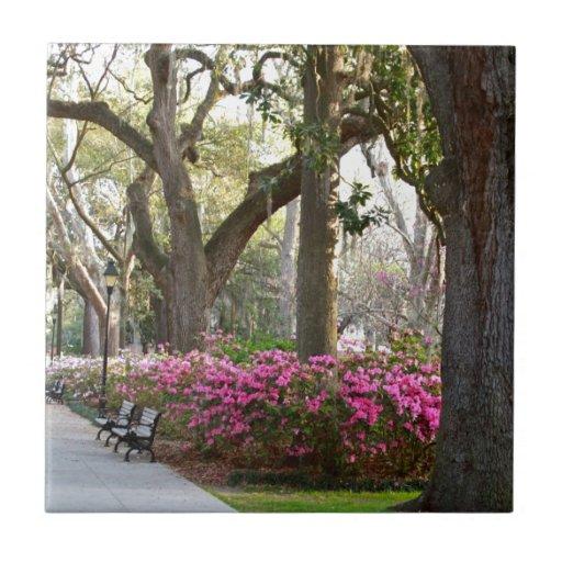 Savannah Georgia in Spring Forsyth Park Azaleas Oa Ceramic Tiles