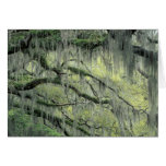 Savannah, Georgia, Live Oak tree draped with Greeting Card