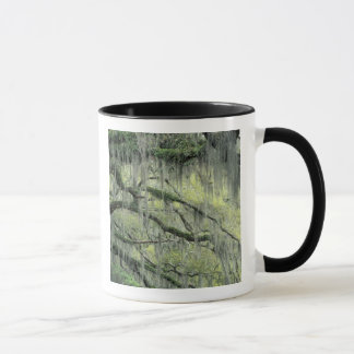 Savannah, Georgia, Live Oak tree draped with Mug