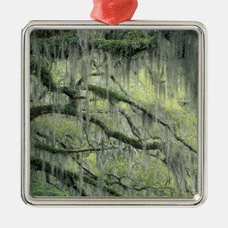 Savannah, Georgia, Live Oak tree draped with Christmas Tree Ornament