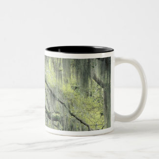 Savannah, Georgia, Live Oak tree draped with Two-Tone Coffee Mug