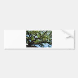 Savannah Live Oak And Spanish Moss Bumper Sticker