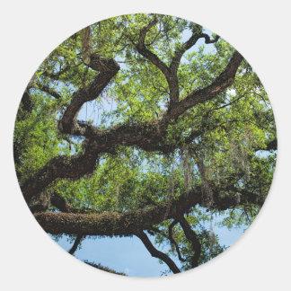 Savannah Live Oak And Spanish Moss Classic Round Sticker