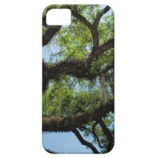 Savannah Live Oak And Spanish Moss iPhone SE/5/5s Case