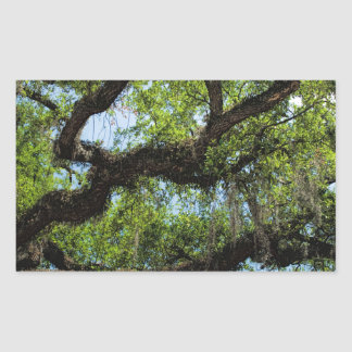 Savannah Live Oak And Spanish Moss Rectangular Sticker