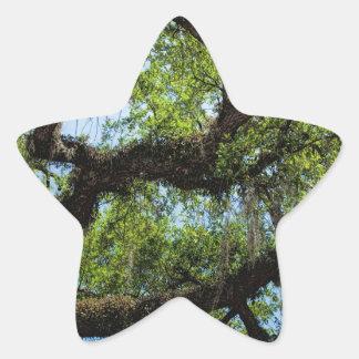 Savannah Live Oak And Spanish Moss Star Sticker