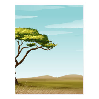 savannah postcard