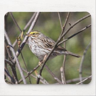Savannah Sparrow Mouse Pad