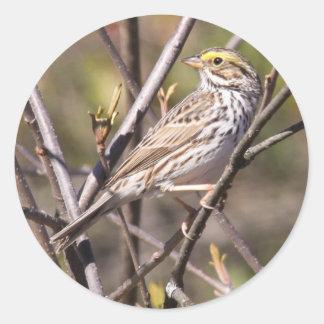 Savannah Sparrow Stickers